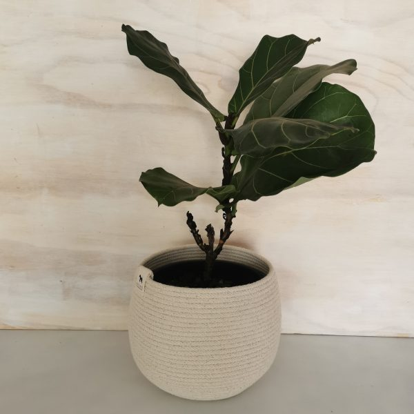Rope Planter Bowl Natural